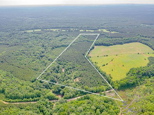 Talbot Co, Big Lazer Creek : Woodland : Talbot County : Georgia