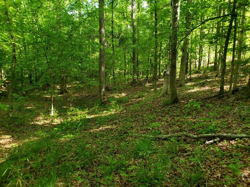 Middleton Tract : Hodges : Greenwood County : South Carolina