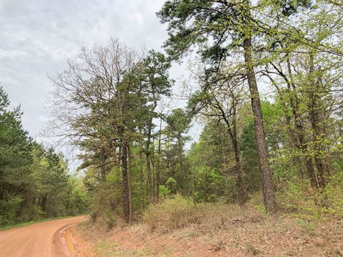 483 Acres Cr 2864 Tract 1017 : Hughes Springs : Cass County : Texas