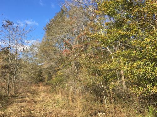 31+/- Acres Hale County, Alabama : Moundville : Hale County : Alabama