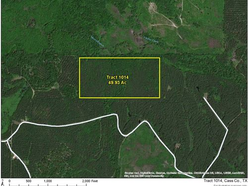 49 Acres Off Hwy 43 Tract 1014 : Bivins : Cass County : Texas