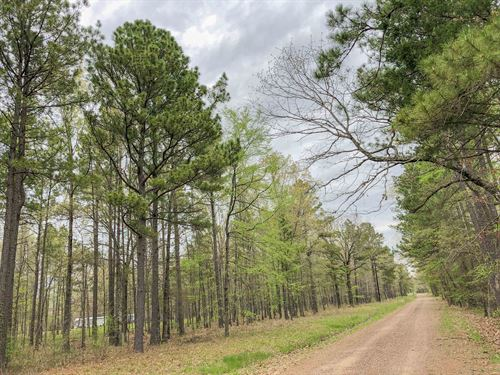 265 Acres Cr 4223 Tract 1005 : Simms : Bowie County : Texas
