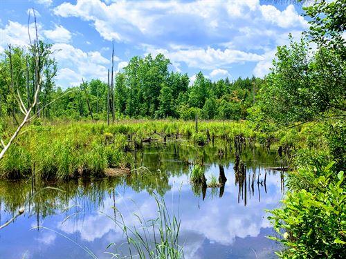 Ponderosa Farms : Glenwood : Wheeler County : Georgia