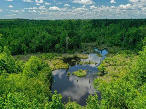 Cabin, Duck Pond, Mature Timber : Sandersville : Washington County : Georgia