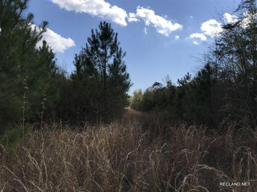 34 Ac, Hunting Tract : Winnfield : Winn Parish : Louisiana