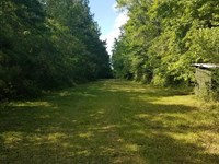 Timber Property Hunting Property : Tylertown : Walthall County : Mississippi