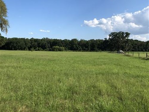 Owner Financing Beautiful Pasture : Bushnell : Sumter County : Florida