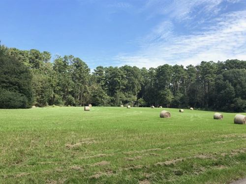 Beautiful Ranch Home On 50+/- Acres : Wesson : Copiah County : Mississippi