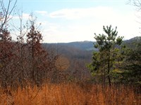 307 Acres Near Kentucky Lake : Waverly : Humphreys County : Tennessee