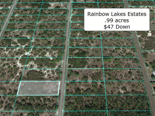 .99 Acre Lightly Wooded Lot : Dunnellon : Marion County : Florida