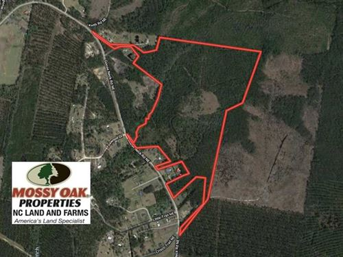 81 Acres of Hunting And Timber Lan : Riegelwood : Brunswick County : North Carolina