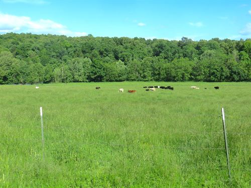 Farm For Sale in The Ozarks : Mammoth Spring : Fulton County : Arkansas