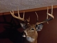 Prime Deer & Turkey Hunting, Timber : Cainsville : Mercer County : Missouri