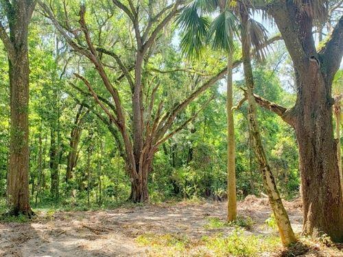 Orange Acres, 7 Parcels : Citra : Marion County : Florida