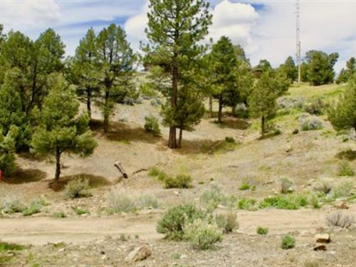 Secluded Ca Land Near Ski Resort : Big Bear : San Bernardino County : California