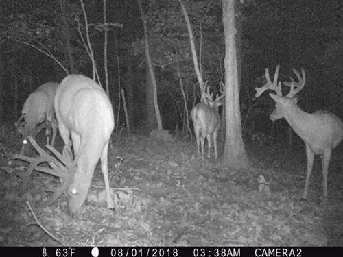 138 Acres in Hart, MO : Hart : McDonald County : Missouri