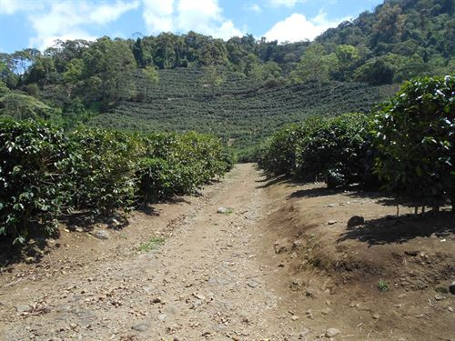 635 Ac, Productive Coffee Farm : Cachi : Costa Rica