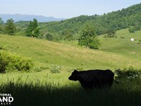 Farm With Rolling Pastures, Woodlan : Leicester : Buncombe County : North Carolina