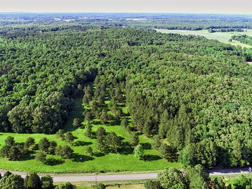 Hunting Land Jackson Tn, Mature : Beech Bluff : Madison County : Tennessee