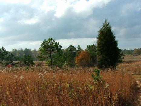 50 Acres, Open Land : Greenville : Butler County : Alabama