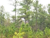 Moss Road, Lot 22 : Fairmount : Pickens County : Georgia