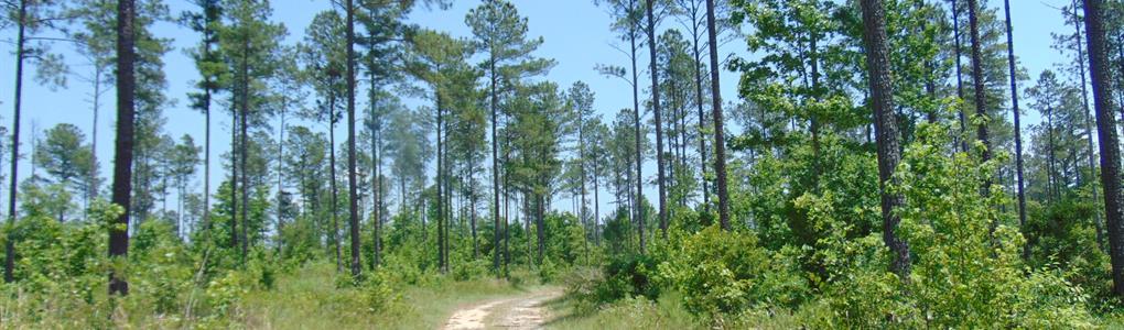 Tall Timber Little Sandy Creek : Gray : Jones County : Georgia