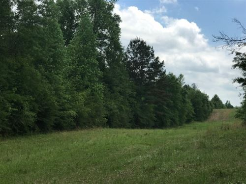 40 Acre Hunting Tract : Tylertown : Walthall County : Mississippi