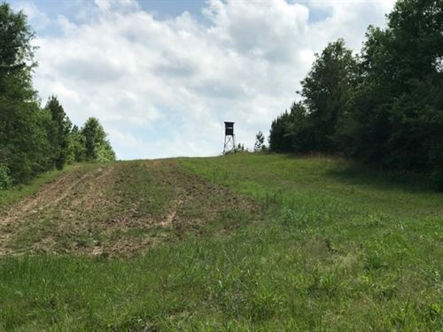 70 Acre Hunting Tract : Tylertown : Walthall County : Mississippi