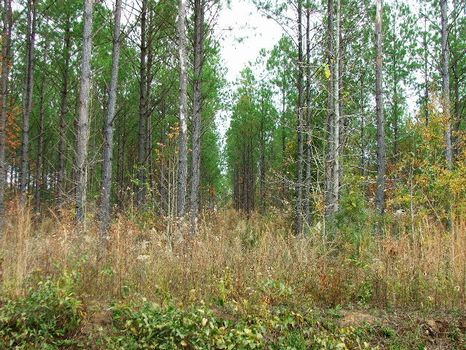 Investment, 40.66 Acres : Georgiana : Butler County : Alabama