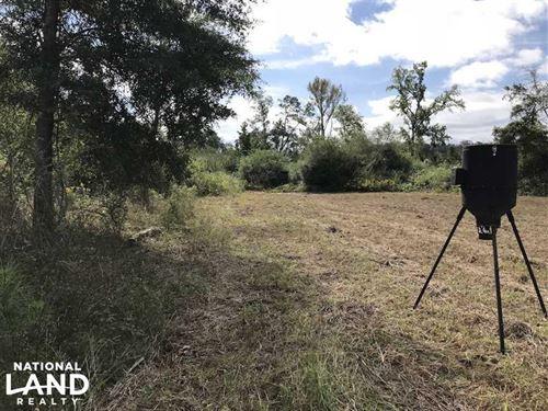 Hunting And Recreational Land : Carthage : Neshoba County : Mississippi