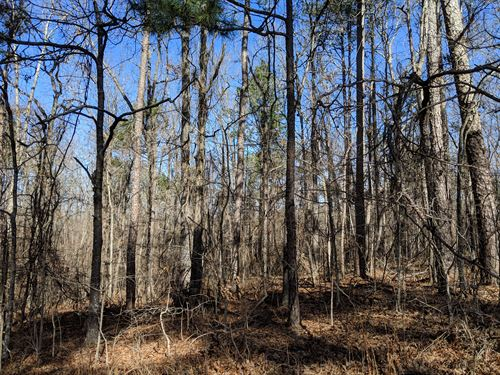 28.5+/- Acres Pinegrove Road : Heflin : Cleburne County : Alabama