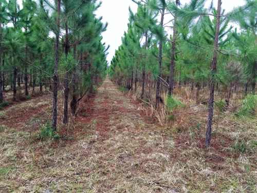 40 Acres Close To State Park : O'brien : Suwannee County : Florida