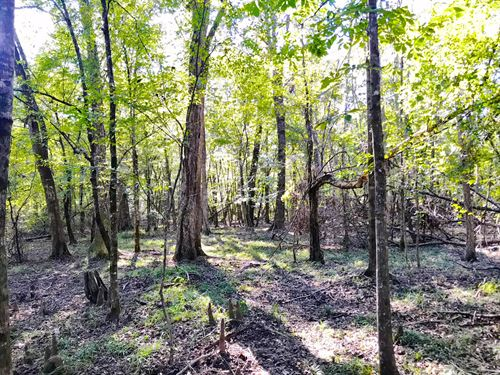 Olustee Creek Tract : Briar Hill : Pike County : Alabama