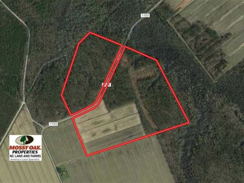 75 Acres of Farm And Hunting Land : Columbia : Tyrrell County : North Carolina