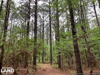 Loring Road Timber And Hunting Inve : Camden : Madison County : Mississippi