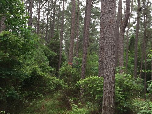 Southern Arkansas Pine Hunting Land : Chidester : Ouachita County : Arkansas