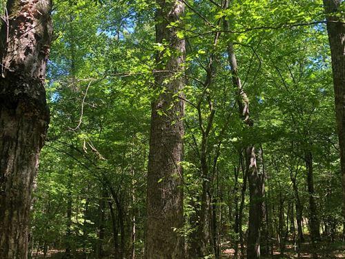 Pine Timber / W Hardwood Creek Land : Rosston : Nevada County : Arkansas