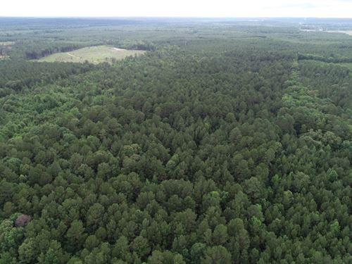 Pine Timber Land, Creek Drain : Rosston : Nevada County : Arkansas