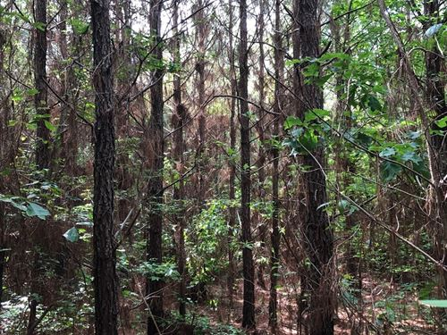 Planted Pine Land, Creek Drain : Washington : Hempstead County : Arkansas