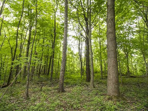 S, Parrish Rd, 24 Acres, Ashtabu : Conneaut : Ashtabula County : Ohio