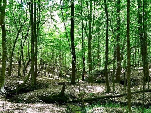 Under Contract, 7 Acres of Timber : Kittrell : Vance County : North Carolina