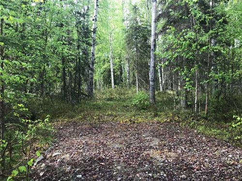 Nicely Treed & Level Improved Lot : Willow : Matanuska-Susitna Borough : Alaska