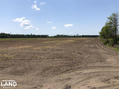 Grays Open Tillable Farming Fields : Early Branch : Jasper County : South Carolina