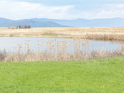 Montana Goose & Duck Season Wit : Charlo : Lake County : Montana