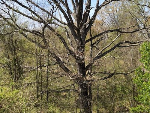 Tate County Farm And Homesite : Sarah : Tate County : Mississippi