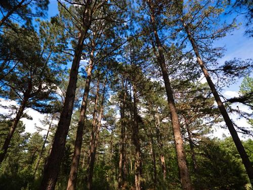 293 Acres of Beautiful Recreationa : Nacogdoches : Texas