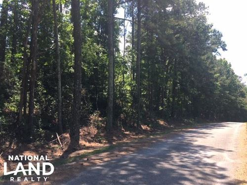 Airport Road Hunting & Timber Tract : Oneonta : Blount County : Alabama