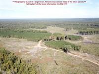 Myrtlewood Tract, Parcel A : Myrtlewood : Marengo County : Alabama