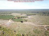 Myrtlewood Tract, Parcel B : Myrtlewood : Marengo County : Alabama