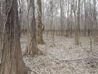 Bullpen South Tract : Wagarville : Washington County : Alabama